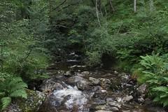 scottish forest (naturmystikk) Tags: forest wald landschaft landscape fern farn moss moos bach creek fluss natur nature trees bäume vegetation scotland schottland loch lomond nationalpark