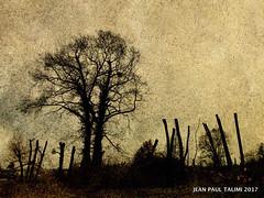 Terrain de guerre (JEAN PAUL TALIMI) Tags: appoigny zen guerre talimi arbre horizon arbres nature silouettes bourgogne yonne france fantomes exterieur noir piquets