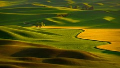 Tennessee Tree Valley (Malcolm Carlaw) Tags: palouse sunset tennesseetree landscape wheat