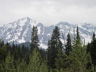 British Columbia Wolf Hunt & Big Game 21