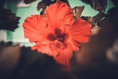 flower (marcelo.guerra.fotos) Tags: flower nature natureza colorful color flores flor flora