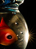 Inspiration Two Ways (Watching Pancakes) Tags: macromondays inspiredbyasong venetianglass fishbowl glass fish starburst sigma 105mm