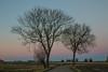 Dusk (Infomastern) Tags: söderslätt countryside dusk landsbygd landscape landskap skymning tree träd