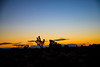 1.15.17 Sunrise Joshua Tree National Park (Danielle_M_Bedics) Tags: sunrise desert joshuatreenationalpark joshuatree sky moon nature sun mars mystical morning landscape magical peaceful surreal serene tranquil yellow sunshine vast desertsky