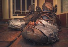 Huntsman and his boots (Kristian Bell) Tags: huntsman spider arachnid wild wildlife creepy crawly animal invertebrate old walking hiking boots melbourne australia victoria sony kris kristian bell laowa 15mm
