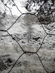 Fence around woods, 2016 Dec 26 -- photo 2 (Dunnock_D) Tags: uk unitedkingdom britain scotland highlands highland badenoch grey cloud cloudy sky snow fence tree hexagon hexagons