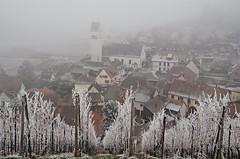 Katzenthal (Philippe Haumesser Photographies (+ 4000 000 views) Tags: outside brouillard fog froid cold hiver winter village église church vigne vignes vine vines vineyard vineyards vignoble katzenthal alsace elsass france hautrhin 68 nikond7000 nikon d7000 reflex 2016 givre frost