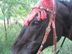 Summer 2012 067 (kathyshelton) Tags: summer2012