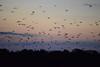 Flying Foxes at Kalong Island (Andreas' Photos) Tags: indonesia labuanbajo flores kalongisland flyingfox