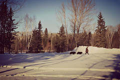 The Simple Life (Cindy's Here) Tags: thesimplelife walking dogs mansbestfriends kakabekafalls ontario canada winter snow canon ansh scavenger7 shadows outdoor sc0117 outdoors