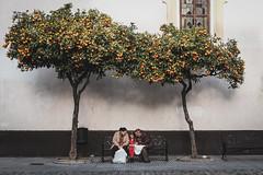 Under the shade of the family tree. (Patberg) Tags: orangetree grandparents girl bench street streetphotography cadiz family