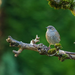 Bird on a stick (Nigel Fox (insignia50)) Tags: garden bird wren