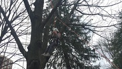 Girl combs down from tree (Montgomery Parks, MNCPPC) Tags: treeclimbing woodsidepark january2017 2017