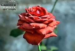 Flor 031