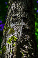 04062015_nature_printemps_33