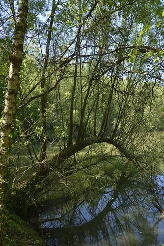 L'arbre en arche