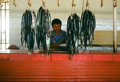 (Jeremy Hatcher) Tags: chile fish fisherman rojo peces mercado pescado pescador mejillones