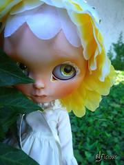 The shy Daisy