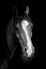 **** (c.r.borders) Tags: blackandwhite horse blackbackground monochromatic montone equine