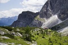 Image01770 (Lorenzo Angelini) Tags: flowers summer mountain alps green nature montagna dolomiti monti sappada veneto cadore prati comelico