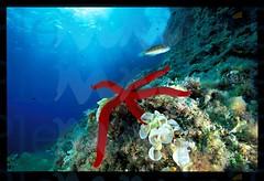 ambmarino-con-stella-rossa-e-donzelle_15370013603_o