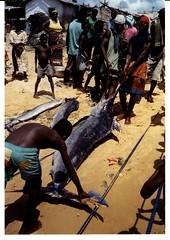 Fishermen hauling in swordfish