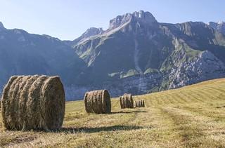 Les foins, bientôt rentrés. (hay, soon brought in.)