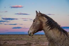 horse (lotsa50) Tags: horse horses equines animal animals sunset