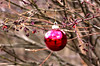 New Year's Eve Approaches on the Vine of a Burning Bush (Emily Stoller) Tags: pentax pentaxk5 pentax100macrowr photographers photomatix photoshop hdr midwest indiana indianapolis indianaphotographers indianapolisphotographers i