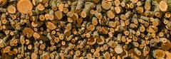 Bring Wood! (Santini1972) Tags: nikond5100 nikonflickraward nikor nikoneurope pattern texture forest abstract