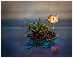 "His Little Piece of ""Land"" (tisatruett) Tags: bird reflection island art artistic artisticview artisticexpression alone"