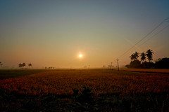 Surrender to what is.Let go of what was. Have Faith in what will be. (Lakshmi. R.K.) Tags: nikon d 5200 2016 nirpalani tamilnadu
