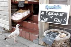 """seabass for dinner bey "" (Jon Brambo) Tags: looe seagull fish pengelleys east cornwall kernow shop cheeky camera conaon pancake lense south west 450d"