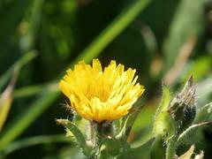 PC271243 (jesust793) Tags: flores flowers naturaleza nature