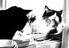 bath time for Gandalf monochrome (PDKImages) Tags: cat black ragdoll monochrome pet animal feline blackcat asleep eyes calming