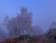 Frosty,foggy morning walk. (microwyred) Tags: events christmas frost fog trees moody