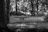 "it was_.jpg (Daniel Gentsch) Tags: sigmatune danielgentsch photography photos raw foto flickr shotoftheday me lightroom photo bw blackwhite sw schwarzweiss schwarzweis blackandwhite germany black white monochrome blanconegro ""available light"" light shadow einfarbig noiretblanc noir blanc weiss weis schwarz ""schwarzer hintergrund"" ""bianco e nero"" nikon d300 kamera nikond300 elektonik objektiv nikor camera glass hardware reflection equipment nikkor dx explore dslr"