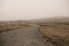 Foggy path (lnoelle89) Tags: fog foggy winter january mono trail path snakepath escarpment landscape canon canonphotography canoneos canon6d niagara niagaraphotgrapher niagaraphotography