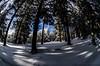 en sous bois (cedric.simonot) Tags: nature paysage hivers neige ski nikond7000 105mm28