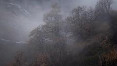 un jour brumeux et pluvieux... (bulbocode909) Tags: valais suisse nature hiver brume pluie arbres brouillard montagnes vignes fully chênes