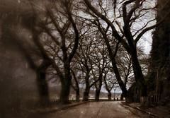 * (PattyK.) Tags: ioannina giannena giannina mycity whereilive lakeside lakefront epirus greece grecia griechenland europe europeanunion march 2013 bythelake trees snapseed amateurphotographer mylovelycity ιωάννινα γιάννενα ήπειροσ βαλκάνια ελλάδα παραλίμνιο μώλοσ δίπλαστηλίμνη μάρτιοσ διονυσίουσκυλοσόφου ηπόλημου όμορφηπόλη