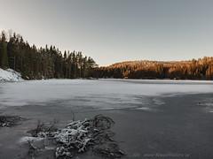 20170113099711 (koppomcolors) Tags: koppomcolors winter vinter värmland varmland sweden sverige scandinavia håltebyn