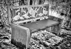 Birder Bench (creepingvinesimages) Tags: hmm monochrome blackandwhite bw bench pond outdoors thetualatinrivernationalwildliferefuge sherwood oregon nikon d7000 pse14 topaz