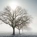 Matin d'hiver - Campagne autour de Dijon
