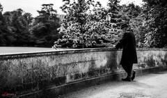 English Gentelman (_Hadock_) Tags: bridge cambridge shadow wallpaper white man black english blanco nature hat azul john de person reading nikon jon y think negro creative commons smith screen read elder thinking d750 ingles anciano tamron fondo f28 pensar pantalla caballero saver noire leyendo bombin walpaper 2470 gentelman comons