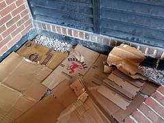 Fireball (Daquella manera) Tags: dc washington bed bedroom homeless cardboard sin techo