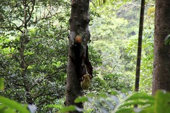 Giant malabar squirrel Dare Nature Wayanad