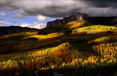 ..The Light in Shadows.. (Ravisankar RP) Tags: evening aspen colorado owlcreekpass d600 50mm nikon ravisankar fall autumn usa co light shadows yellow