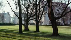 16.12.2016 (Fregoli Cotard) Tags: park opera poznan winter sun shadow dailyjournal dailyphoto dailyphotograph daily 366 366daily 366dailyproject 366days 366dailyphoto 366dailyjournal 366project 366photoproject 366photos everydayphoto everydayphotography everydayjournal aphotoeveryday photographicaljournal photojournal photodiary 351366 351of366