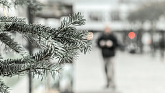 Old Pine (PokemonaDeChroma) Tags: bokeh depthoffield pinetree streetscene paris december 2016 christmasinthestreet